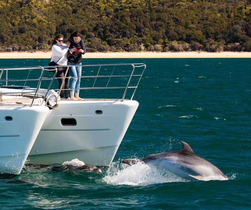 Cruise the Abel Tasman with Abel Tasman Charters, we sometimes see dolphins