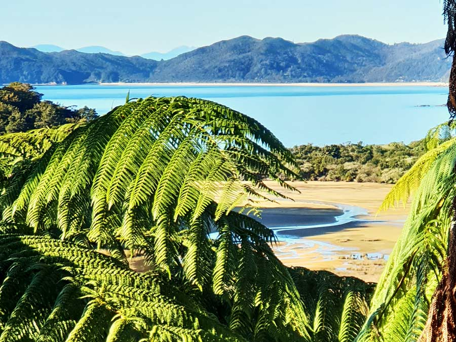 Beautiful Abel Tasman views