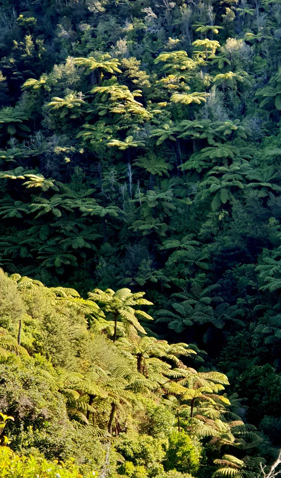 Enjoy a bush walk in New Zealand's Abel Tasman National Park